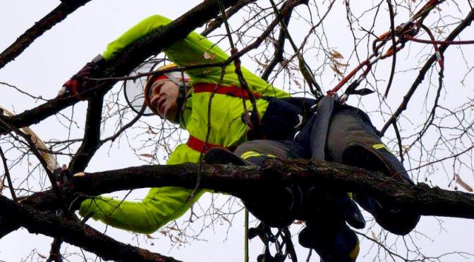 rizikova_kaceni_stromu